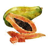 Papaya on white background. Watercolor illustration