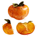 Persimmon on white background. Watercolor illustration