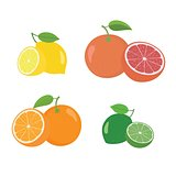 Fresh citrus fruits whole and halves 4 icons square with orange grapefruit lemon lyme