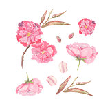 Set of Watercolor illustration of pink Apple and Cherry flowers. Element for design of invitations, movie posters, fabrics and other objects. Isolated on white.