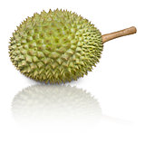 Durian, pronouns as King of Fruits, isolated on white background