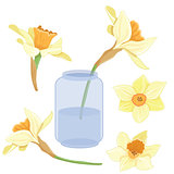 Bouquet narcissus in a vase isolated vector clipart set illustration of spring narcissus flowers
