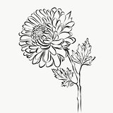 Lovely Isolated big Flower sketch grafical paint