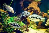 Colorful fish in aquarium