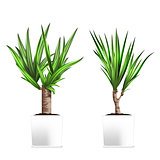 Yucca tree in a pots. Hand drawn vector illustration on white background. Element of home decor. The symbol of growth and ecology.