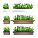 Fresh green grass in a rectangular pots. Element of home decor. The symbol of growth and ecology. Isolated on white