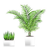 Palm and grass potted in the rectangular containers isolated on white. Element of home decor. The symbol of growth and ecology.
