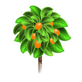 Orange tree with mature fruits isolated on a white background. Element of home decor. The symbol of growth and ecology.