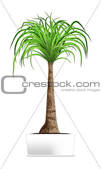 Green palm in the white pot isolated on white. Element of home decor. The symbol of growth and ecology.