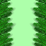 Green Fir Branches