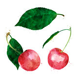 Cherry on white background. Watercolor illustration