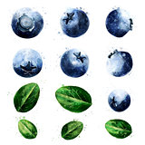 Blueberries on white background. Watercolor illustration