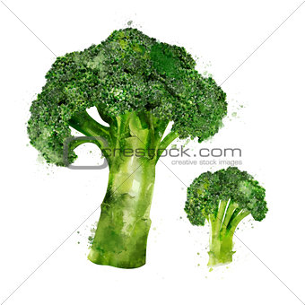 Broccoli on white background. Watercolor illustration