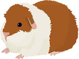 Vector illustration of cartoon guinea pig.