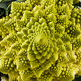 Closeup of Romanesco broccoli