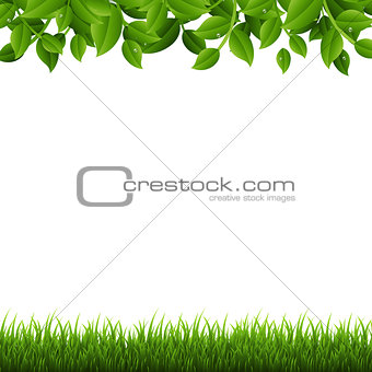 Green Branches And Grass