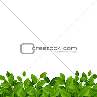 Green Branches With Leaves Border
