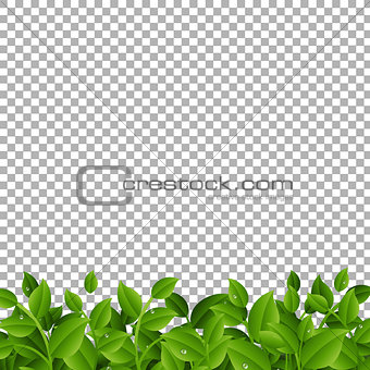 Green Branches With Leaves Border Transparent background