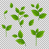 Green Branches With Leaves Transparent Background
