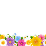Flowers Border White Background