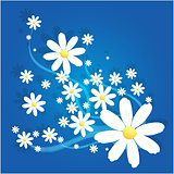 Matricaria camomile flower