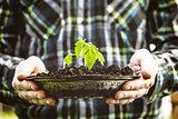 Garden seedling in farmer's hands