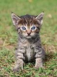 Cute little kitten portrait