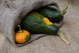 Small orange gourd with two large green warty squashes