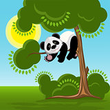 Panda on the Tree illustration