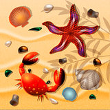 Shells, crab and starfishes on sand background.