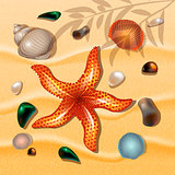 Shells and starfishes on sand background. Summer Theme