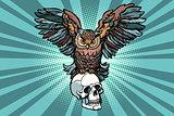 Owl and human skull