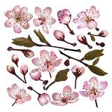 Set of Blossoming sakura pink flowers