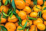 tangerines on market