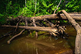 The old tree fallen into the creek.