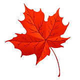 Orange maple leaf isolated on white background