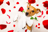 happy valentines dog