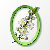 Branch of white cherry flowers in green frame