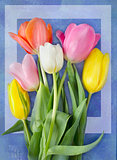 Beautiful blossoming tulip flower. Floral design. Nature background. Spring background with beautiful fresh flowers
