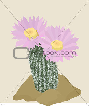 Cactus with pink flowers on the light background.