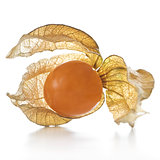 Physalis, fruit with papery husk