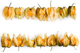 Physalis, fruits with papery husk