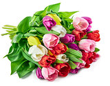 Spring tulips flowers bunch greetings romantic gift