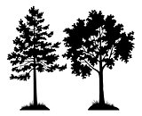 Silhouette Trees Pine and Maple