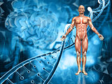 3D medical background with male figure, DNA strands and brain