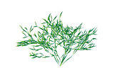 Green shrub isolated vector