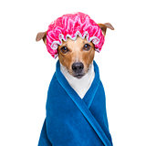dog in  wellness spa