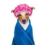 dog in  wellness spa