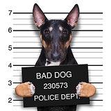 mugshot dog at police station