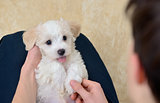 Teen boy with white puppy maltese dog